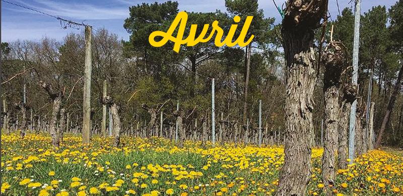 Vos sorties dans le vignoble en avril