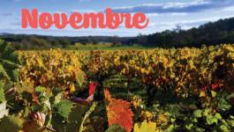 Vos sorties dans le vignoble en novembre