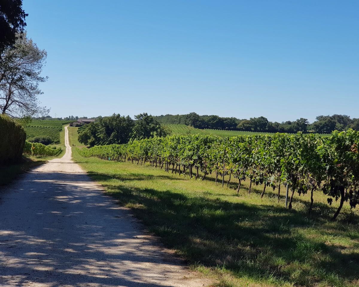 Dans les vignes Château Lisennes ©Anne Lataillade