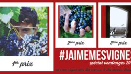 #jaimemesvignes spécial vendanges 2017