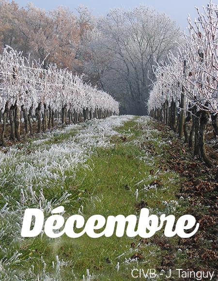 Vos sorties dans le vignoble en décembre