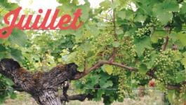 Vos sorties dans le vignoble en juillet