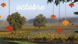 Vos sorties dans le vignoble en octobre