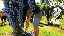 Vos sorties dans le vignoble en septembre