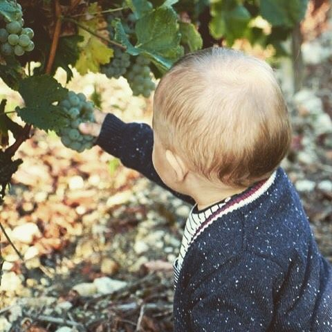un #happybday à notre petit dernier, Camille ! #vendanges de notre 100% Sauvignon Blanc